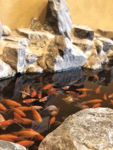 素敵な旅館!廊下に金魚!